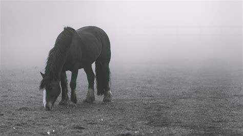 horse  fog wallpaper iphone android desktop backgrounds