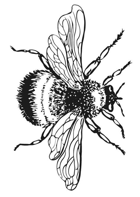 1426 best printables images on Pinterest | Drawing flowers, Flower drawings and Sketches