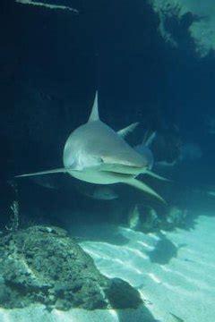 kinds  sharks    atlantic ocean animals
