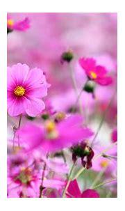 Free Flowers Wallpaper for phone | PixelsTalk.Net