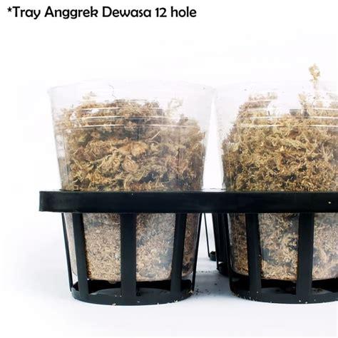 Pot Anggrek Plastik tray semai bibit anggrek untuk pot anggrek 3 5