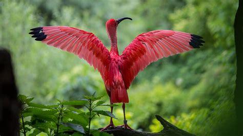 Animal And Bird Hd Wallpaper - pink most beautiful bird desktop hd wallpapers hd