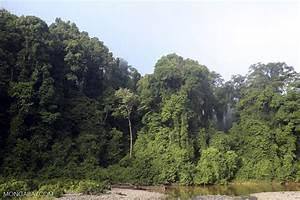 Danum Valley rainforest -- sabah_2773