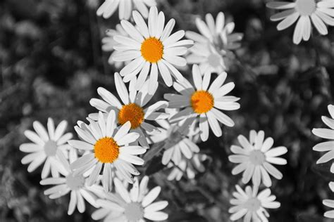 Sind Schwarz Und Weiß Farben by Schwarz Wei 223 Und Ein Wenig Farbe Foto Bild Pflanzen