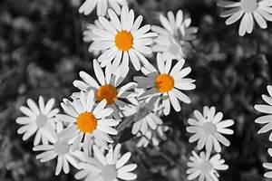 Schwarz Weiß Bilder Mit Farbeffekt Kaufen : schwarz wei und ein wenig farbe foto bild pflanzen pilze flechten bl ten ~ Bigdaddyawards.com Haus und Dekorationen