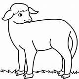 Lamb Coloring sketch template