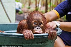 information: But mum, I don't need a bath! Adorable orphan ...