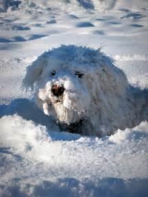 Abominable Snow Dog