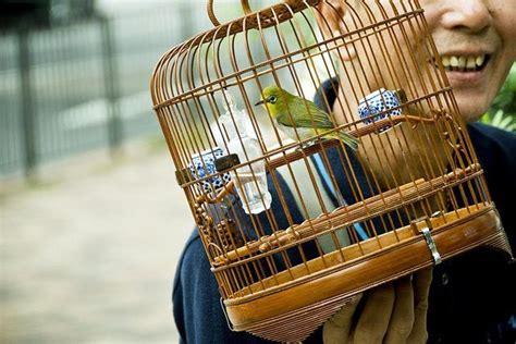 cages bad  birds health birdcages