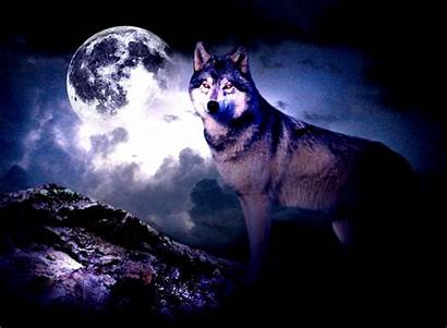 Wolf Moon Wallpapers Animals Spirit Wolves Background