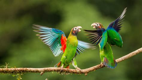 Animals Birds Wallpaper - wallpaper parrots birds wings hd 4k animals 1748