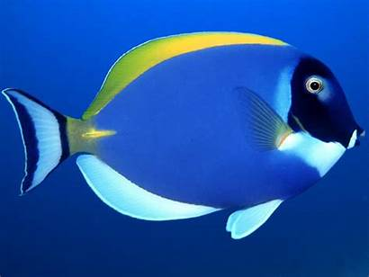 Gambar Ikan Cantik Fishes Yang Fish Ocean
