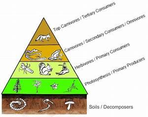 Trophic Chain And Bioaccumulation