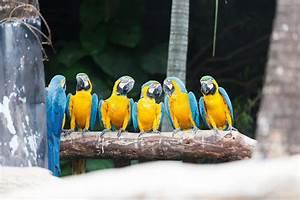 Oiseau Jaune Et Bleu : l 39 oiseau bleu et jaune d 39 ara image stock image du fond groupe 28920075 ~ Melissatoandfro.com Idées de Décoration
