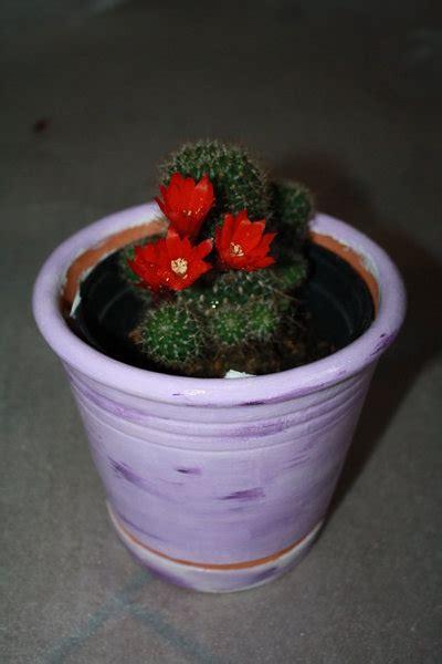 vasi in coccio vasi di coccio decorati per la casa e per te decorare