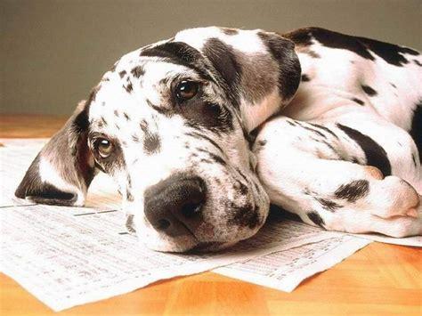 fondos de escritorio de perros fondos de perros