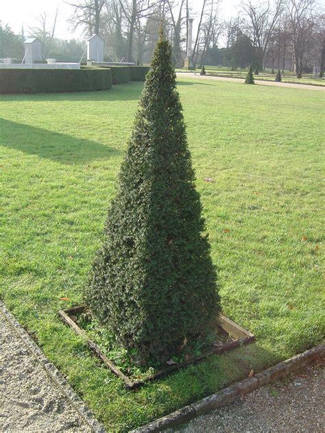 how to shape shrubs file yew sheared jpg wikimedia commons
