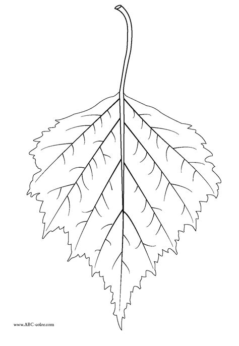 Birch leaf clipart 20 free Cliparts | Download images on