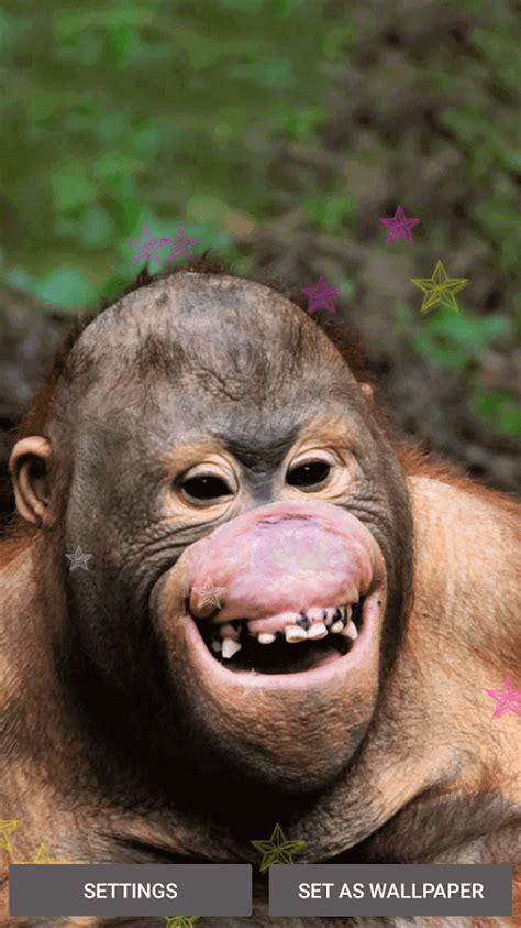 Funny Monkey Live Wallpaper  Android Apps On Google Play