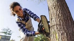 Welche Bäume Darf Man Nicht Fällen : warum der eigene baum nicht einfach gef llt werden darf der seniorenblog baum f llen baum ~ A.2002-acura-tl-radio.info Haus und Dekorationen