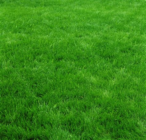 Overseeding Grass In The Fall