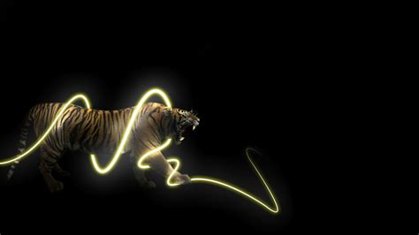 animals light trails tiger black background wallpapers