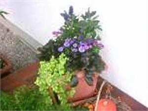 Dauerbepflanzung Für Balkonkästen : herbstbepflanzung balkon pflanzen herbst balkonpflanzen winterhart ~ Frokenaadalensverden.com Haus und Dekorationen