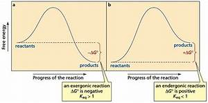 How Can I Draw An Endergonic Reaction In A Potential