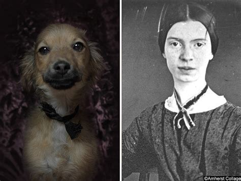 shelter dogs  famous authors  awesome