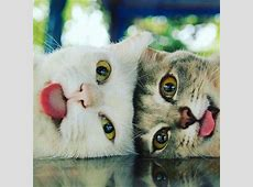Super Cute Kitten 7th October 2016 We Love Cats and