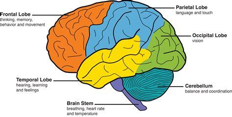 goerme kaybindan sonra beyin daha iyi duymaya nasil adapte