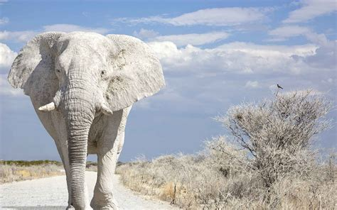 white elephant the white elephant in the room eos investors shell out 700m for purposeless token