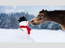 Wir suchen eure kreativsten SchneemannFotos! Bergwelten