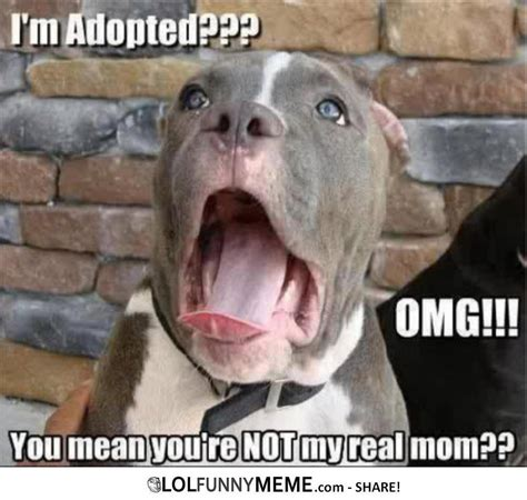 Ermahgerd Animal Memes - funny memes about animals lol funny meme ermahgerd im adopted funny animals pinterest