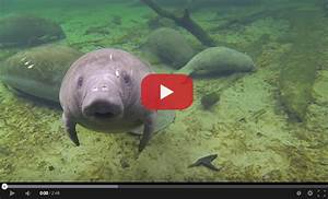 Sub Sea Systems — Our World: Top 10 Cutest Sea Creature Videos