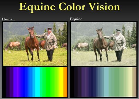 vision horse equine horses eyesight andy dr information overview matthews courtesy night