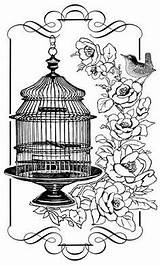 Cage Bird Coloring Pages Birds Adult Birdcage Cages Sheets Stamps Books Colouring Glass Dibujos Roses Transferencias Negro Blanco Clip Printable sketch template