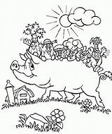 Coloring Pages Pig Pigs Printable sketch template