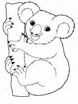 Koala Coloring Pages Print Animal Animals Printable Mycoloring Recommended sketch template