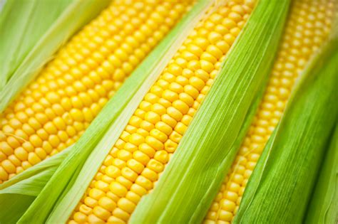 home and garden interior design how and when to corn