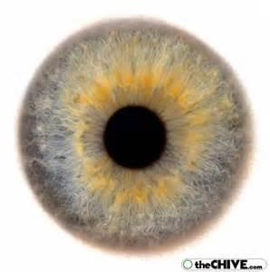Human Beautiful, Humano Anatomia, Eye Colors, Eyescapes ...