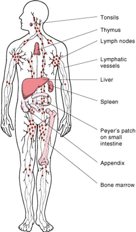 hodgkins lymphoma physiopedia