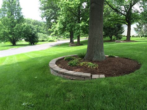 landscaping trees ideas mulching around tree rings for our front yard tree my outdoor oasis pinterest tree