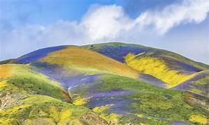 Carrizo Plain   Los Padres ForestWatch  Plain