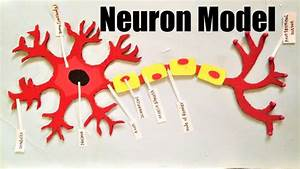 Neuron Structure Model Project For School Science