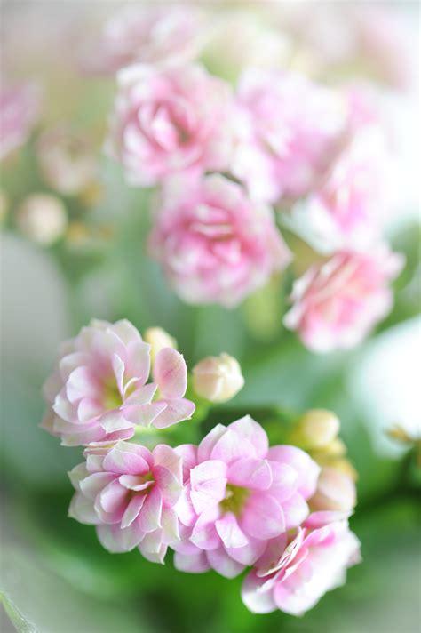 gratis afbeeldingen bloesem fabriek bloem bloemblad