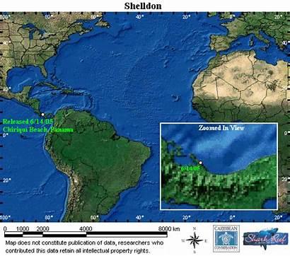 Sea Shelldon Turtle Animated Satellite Map Tracking