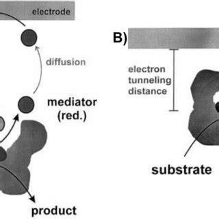 schematic representation   edge plane   basal plane  scientific