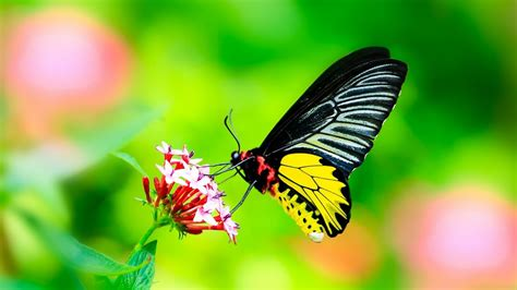 butterfly insect macro wallpapers hd desktop  mobile