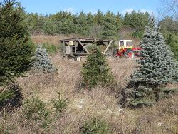 horton original tree farms christmas trees near